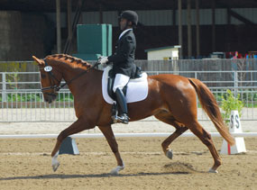 Paeloma - Golden State Dressage